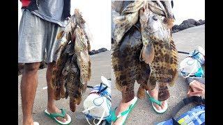 Download Video spot bagus buat mancing ikan kerapu, lihat langsung ditarik ikan MP3 3GP MP4