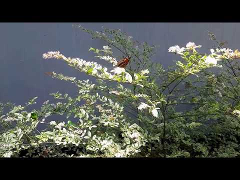 Summer Butterflies / Flying Free / Country Living