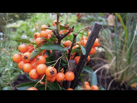 Rośliny ogrodowe stanowiące pokarm dla ptaków