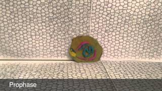 A stop motion project for science class. Legend: Brown/green- cell/cytoplasm Pink- nuclear membrane Blue- ...