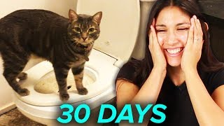 Video I Tried Training My Cat To Use A Toilet In 30 Days MP3, 3GP, MP4, WEBM, AVI, FLV September 2018