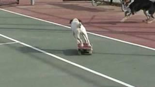 Угги-скейтбордист
