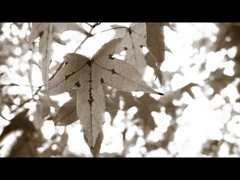 Versos de amor - Te recuerdo como eras. Pablo Neruda. Voz: Mireya Rosua.(20 poemas de amor y una canción desesperada)