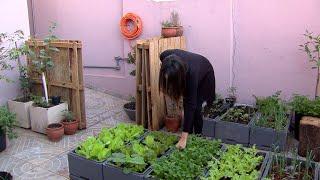 Cultivo de horta em casa aumenta durante a pandemia