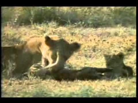 Hot Air Ballooning,Game Viewing ,Walking Safari , Masai Cultural Visits ,Wildebeest Migration