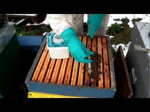 comment traiter les abeilles contre le varroa la r ponse est sur. Black Bedroom Furniture Sets. Home Design Ideas