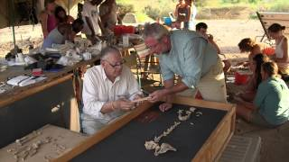 Finding the Lucy Fossil — HHMI BioInteractive Video