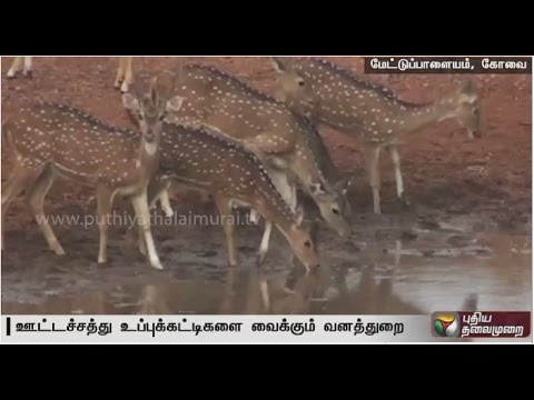 Water-scarcity-Forest-dept-fills-empty-tanks-in-Mettupalayam-forest-for-animals
