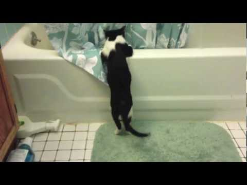Watch 'Kittens Bath Play Time'