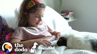 Little Girl And Guinea Pig Are The Cutest Pen Pals | The Dodo Reunited by The Dodo