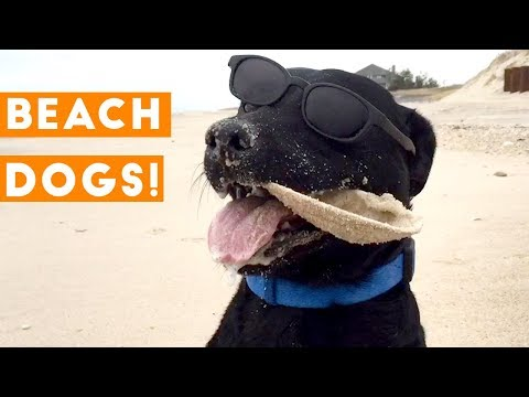 Funny animals - Funniest Dogs at the Beach Compilation 2018  Funny Pet Videos