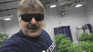 My Crop was Saved by the High Heat Shut Off! by Urban Grower