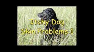 Itchy Dog Skin Problems 1 - Causes Of Dog Itching