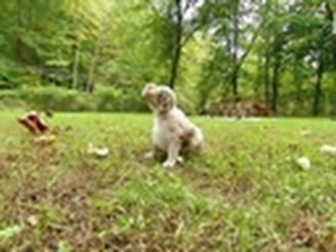 pups - At 3 1/2 weeks old, these puppies get their first taste of the great outdoors! Tune in on Saturdays @9pm on Animal Planet | For more visit http://animal.disc...