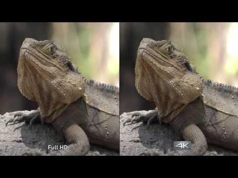 Panasonic 4K Videokamera - Vi jämför 4K och Full HD
