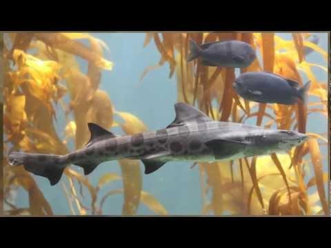 Humans Kill Up to 100 Million Sharks Annually