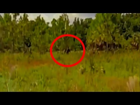 Skunk Ape Caught on Tape While Walking in the field in FL, USA