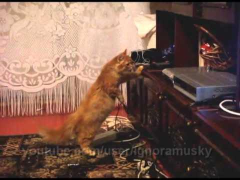 """gatto alle prese con un lettore dvd """"stregato"""""""