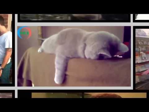 i migliori epic fail dei gatti in una super compilation