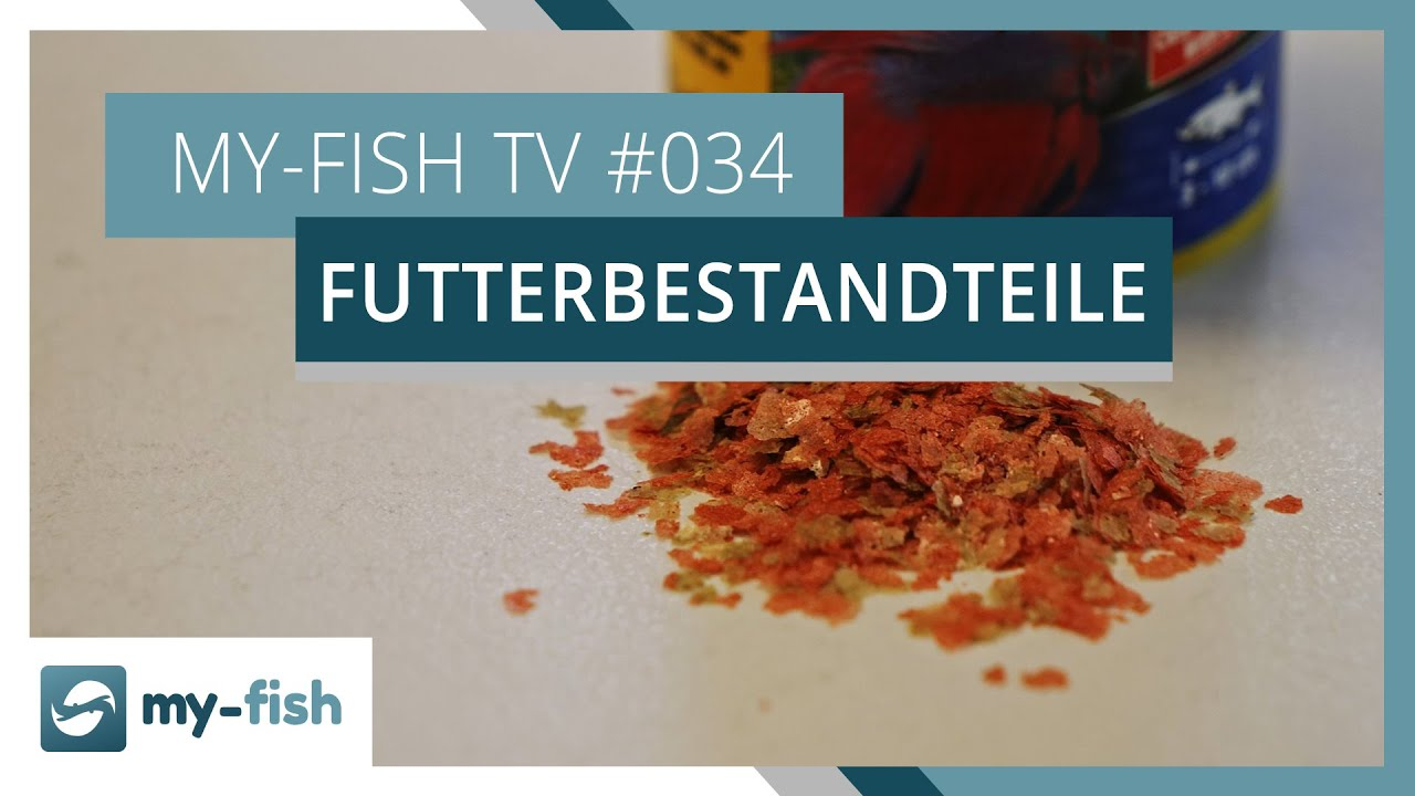 my-fish TV - Deine Nr. 1 Anlaufstelle für alle Themen rund um die Aquaristik 30