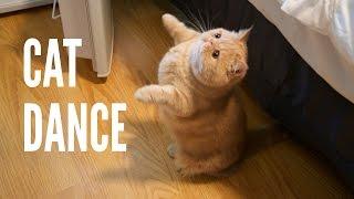 Cat dance!