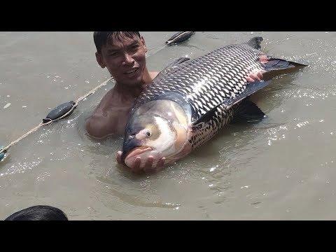 TẬP 2 : Cá Hô là đây. Cách người dân bắt 6 con cá HÔ khổng lồ. | Săn bắt SÓC TRĂNG | - Thời lượng: 15 phút.