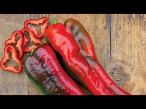 "Burpee Gardens<br />\n<br />\n<strong>Published on Dec 23, 2015</strong>\n\n<p id=""eow-description"">Huge Marconi sweet peppers are a marvel for flavor and texture.</p>"