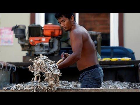 Η Κομισιόν αίρει την «κίτρινη κάρτα» στην Ταϊλάνδη για την αλιεία…