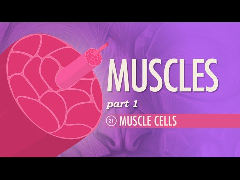 Muscles, part 1 - Muscle Cells Crash Course AP 21