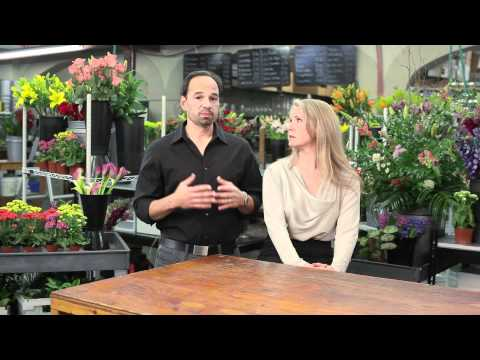 Gone Google - Manny and Clara Gonzales started out small when they opened Tiger Lily, a local flower shop in Charleston, South Carolina. Today, they have grown to be recog...