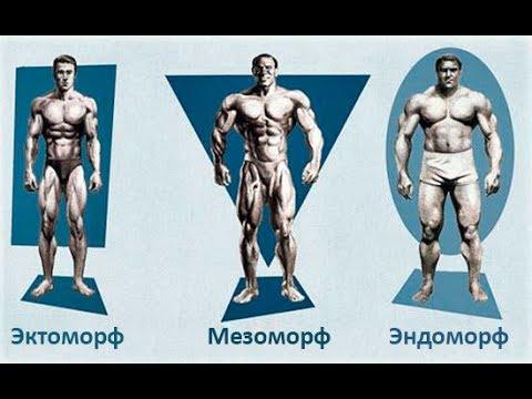 Программы Тренировок для Каждого Типа Телосложения - DomaVideo.Ru