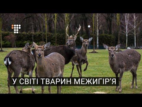 У світі тварин Межигір'я (видео)