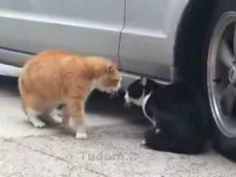 Szakító macskák (Talking cats – hungarian subtitle)