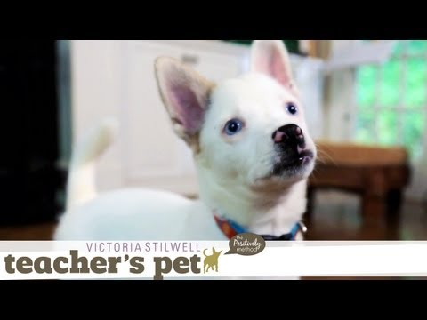 eHowPets - Get more puppy training: http://www.youtube.com/playlist?list=PL0C724F6F6A597540 Follow eHow Pets for regular tips from Victoria Stilwell and more: http://ww...