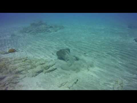 Stingray encounter Tenerife