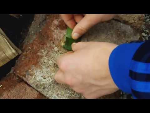 how to isolate scopolamine