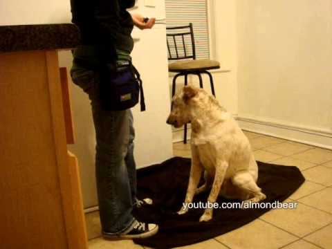 How to teach your dog Wave Bye or Hello