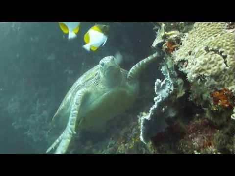 Zeeschildpad onder water
