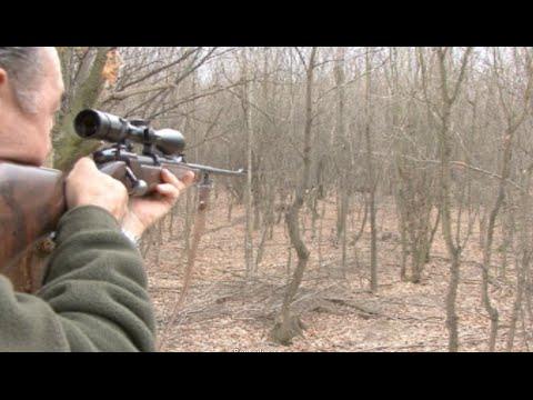 Jabalíes y cazadores 17
