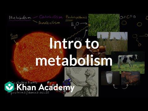 Bioenergetics: ATP: Adenosine Triphosphate | Photosynthesis | Khan Academy