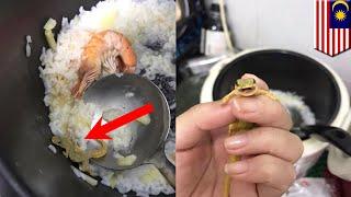 Video Cicak masuk ke dalam bubur seafood gadis Malaysia dan fotonya diunggah ke Facebook - TomoNews MP3, 3GP, MP4, WEBM, AVI, FLV Desember 2018