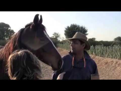 Randonnée au Rajasthan à cheval, Les princes du Marwar