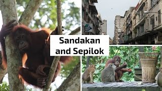 Sandakan and Sepilok Orangutan Rehabilitation Centre, Borneo, Malaysia