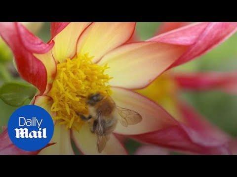Γιατί είναι τόσο σημαντικές οι μέλισσες;