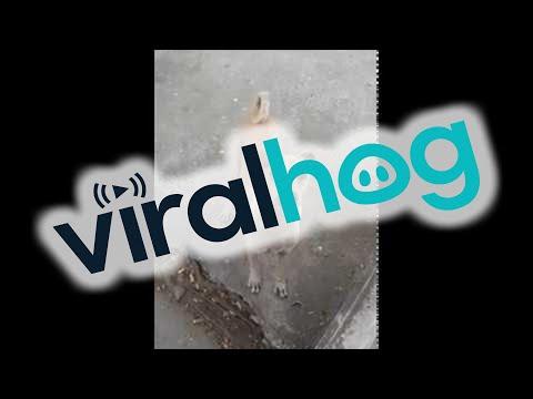 Psia mama prosi o jedzenie aby nakarmić swoje małe szczeniaki