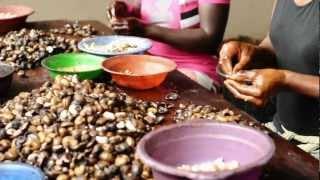 Video Cashew Nut Processing - Peace Corps Ghana MP3, 3GP, MP4, WEBM, AVI, FLV Oktober 2018