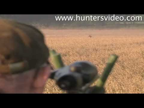 Monster Bucks - Hunters Video