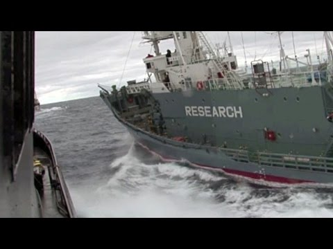 Sea Shepherd Ship Bob Barker is rammed by the Japanese harpoon ship Yushin Maru 3