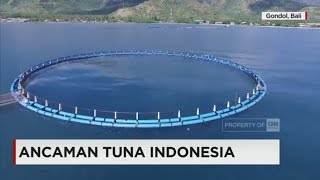 Video Ancaman Tuna Indonesia MP3, 3GP, MP4, WEBM, AVI, FLV Oktober 2018
