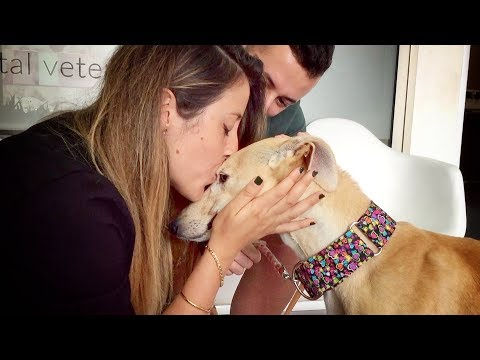 THIS DOG WAS NEVER KISSED IN HER ENTIRE LIFE... UNTIL TODAY